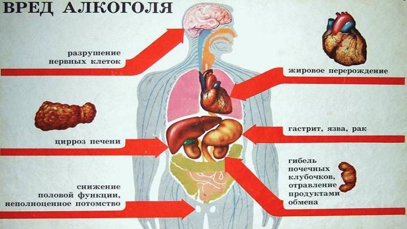 о вреде алкоголя на организм человека