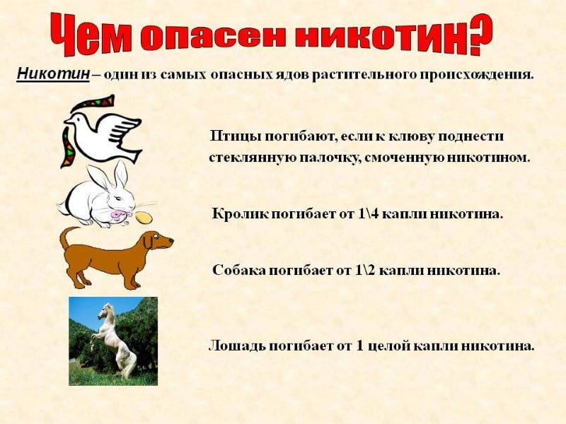 Школьная стенгазета на тему курения и алкоголизма укол независимости от алкоголизма в г.москве