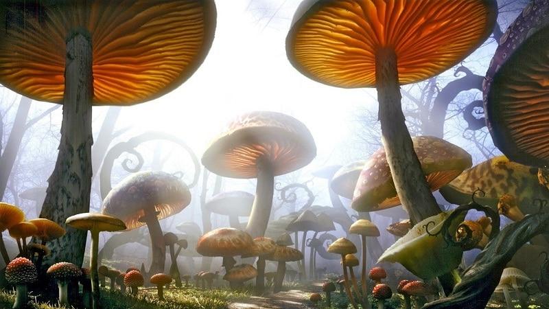 наркотики грибы