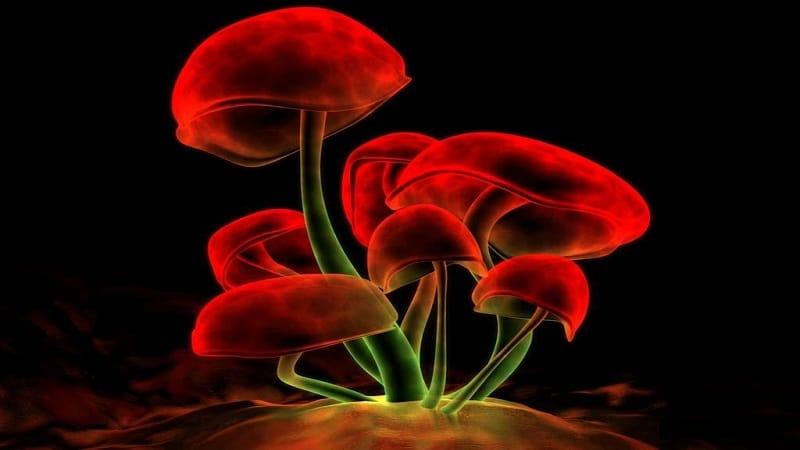 вред галлюциногенных грибов