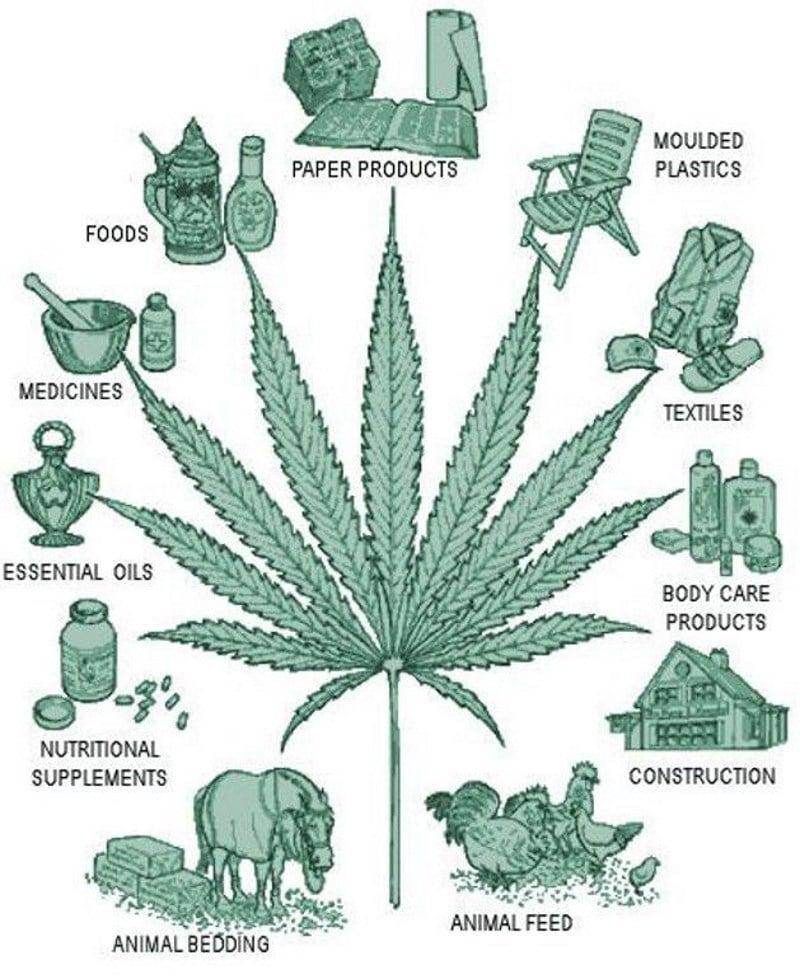 чем марихуана отличается от конопли