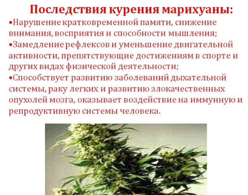 Влияет ли на потенцию курение травы
