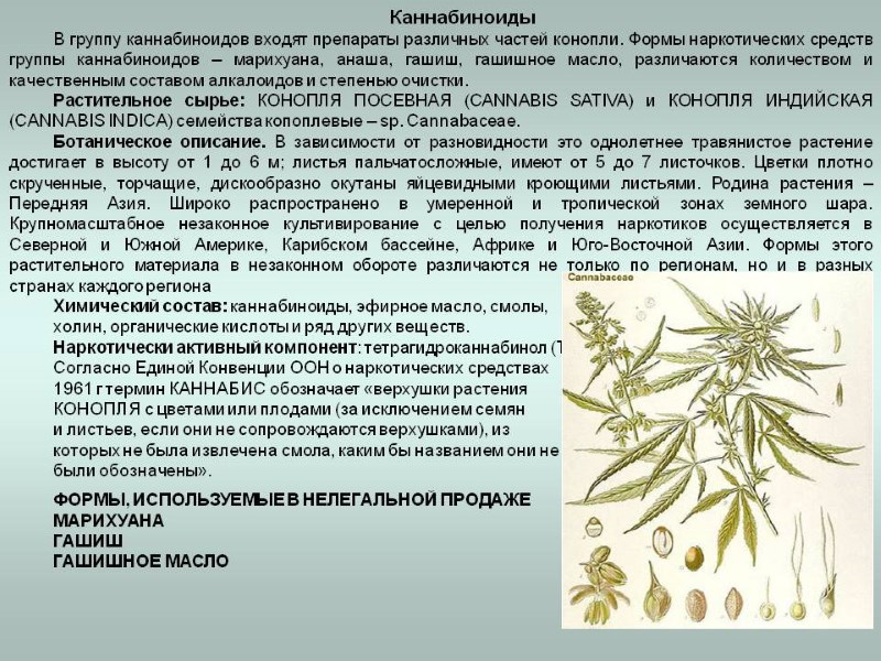 влияние марихуаны на организм