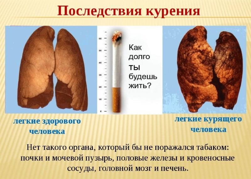 состав чая монастырский сбор от паразитов