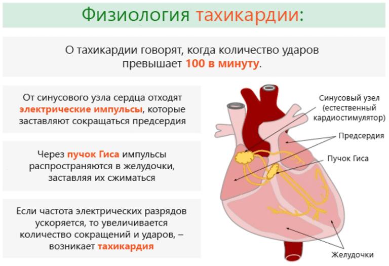 Почему после принятия алкоголя учащается сердцебиение