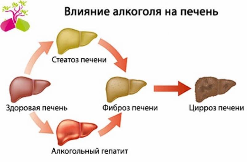 Сколько нужно пить эссенциале чтобы восстановить печень