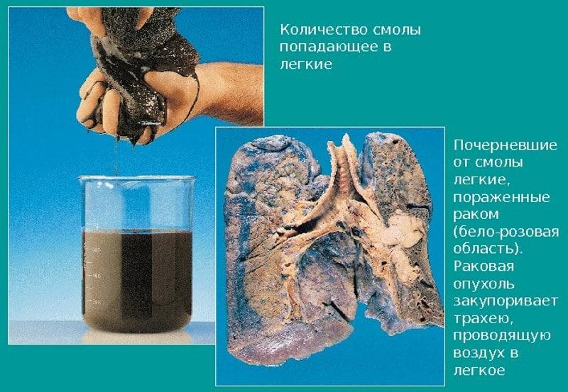 производство кальянного табака
