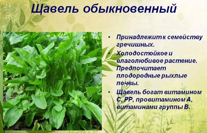 какие травы помогают при алкозависимости