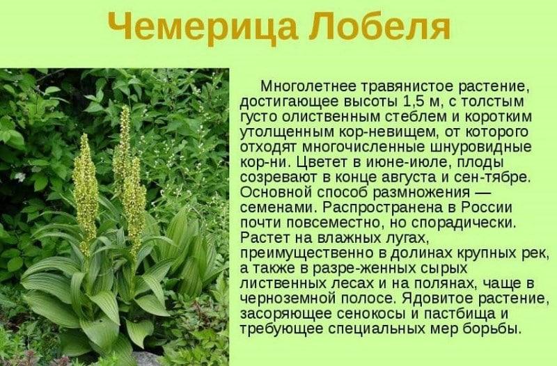 трава против алкоголя