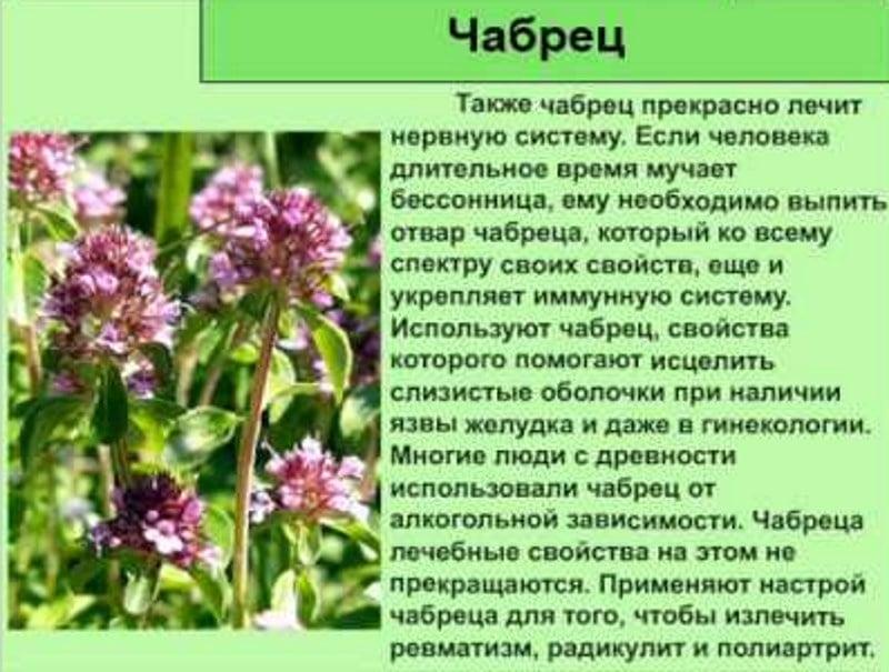 Лечение алкоголизма травами и лекарствами
