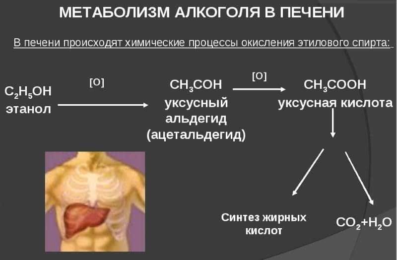 взаимодействие Мелоксикама с алкоголем