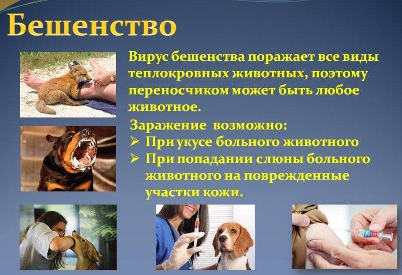 прививка от бешенства и алкоголь последствия