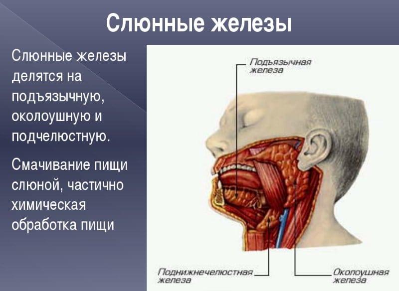 помогает ли курение похудеть