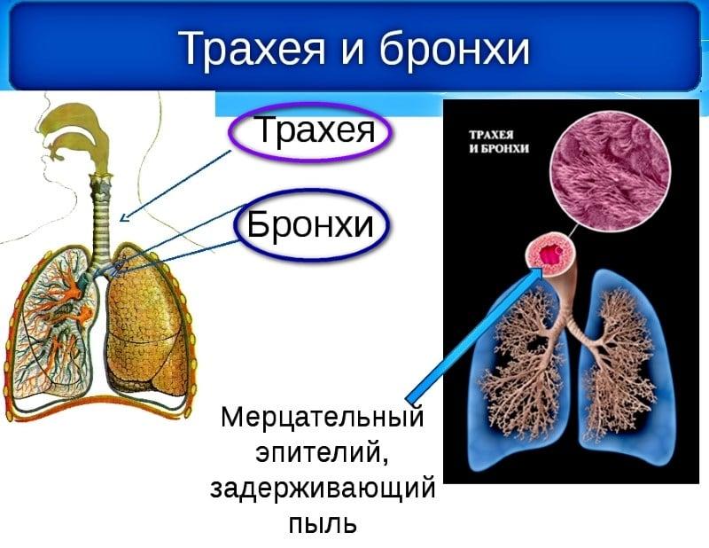После курения появился кашель