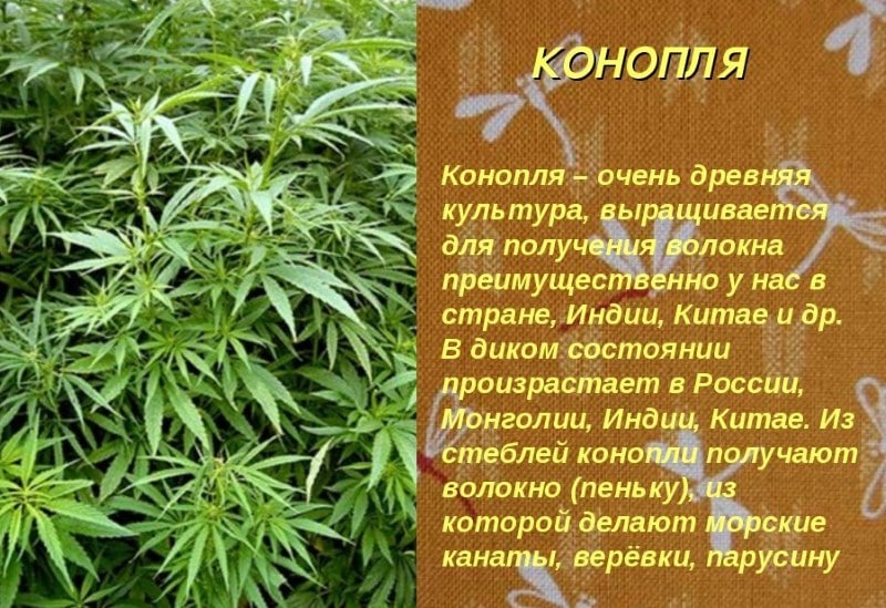 все виды марихуаны
