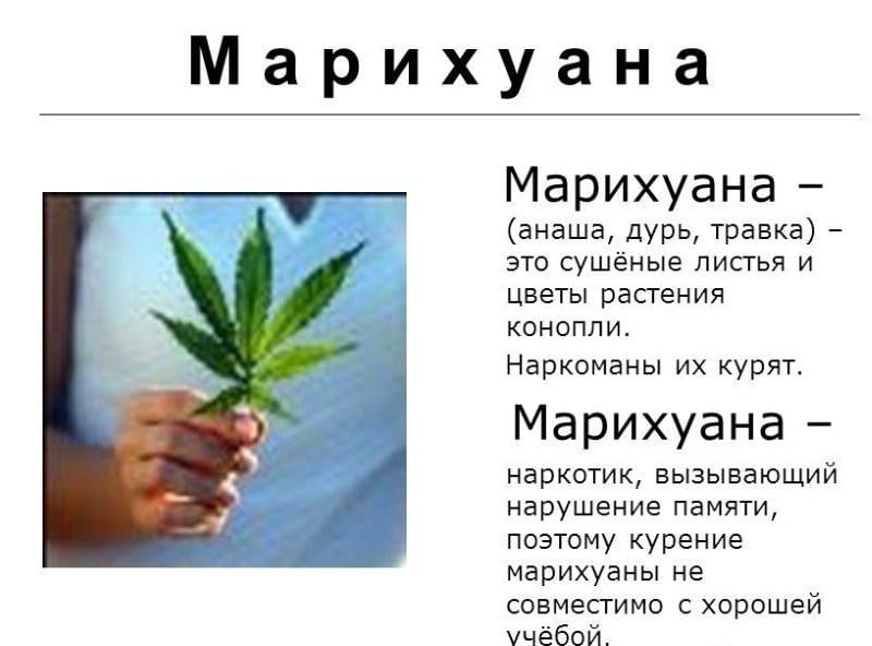 как различить наркотическую коноплю