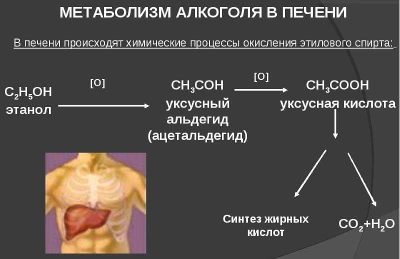 аналоги Метадоксила