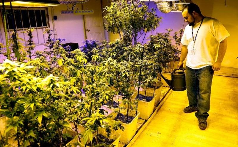 где легализована марихуана