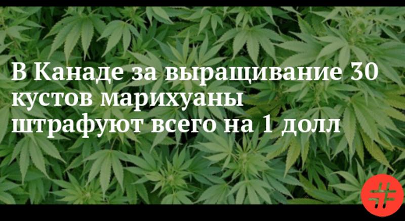 где разрешена марихуана