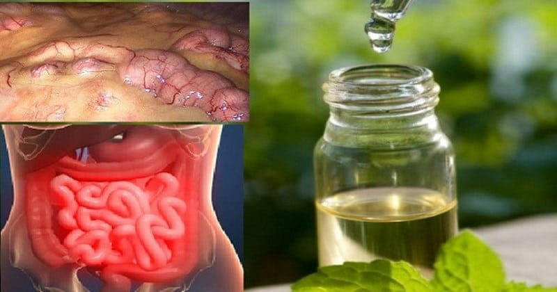 как вывести из организма токсины и шлаки