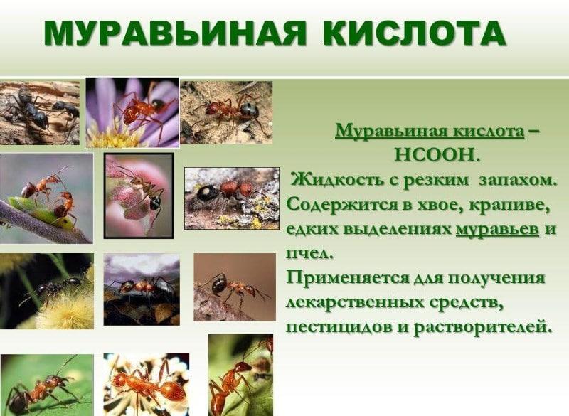 что будет если выпить муравьиный спирт