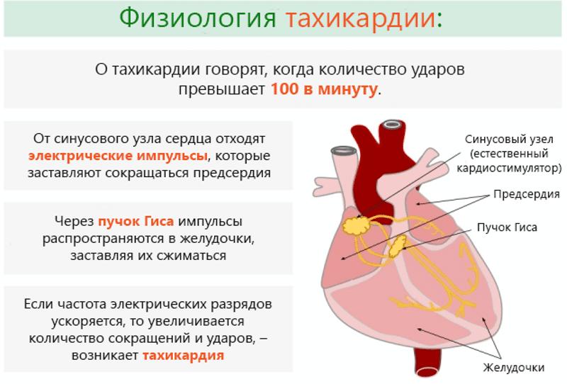 как успокоить сердцебиение после алкоголя в домашних условиях