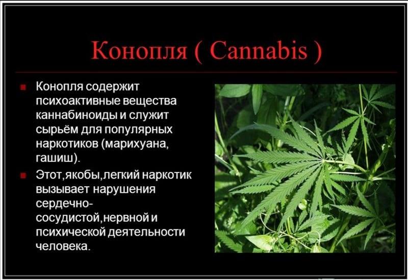вызывает ли марихуана зависимость