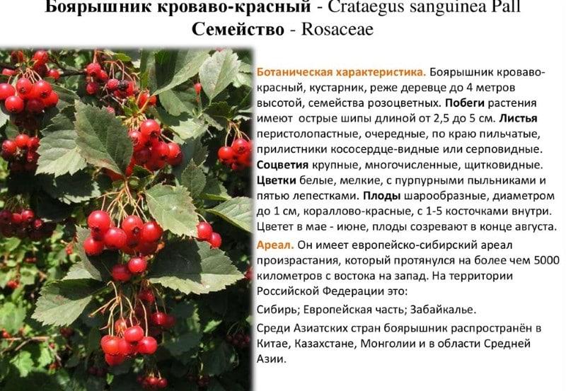 рецепт из свежих ягод