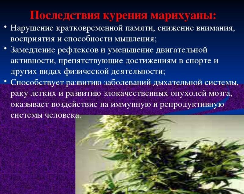 отравление марихуаной