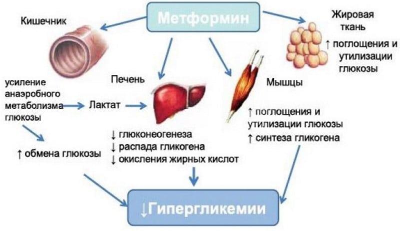 Метформин и алкоголь через сколько можно пить