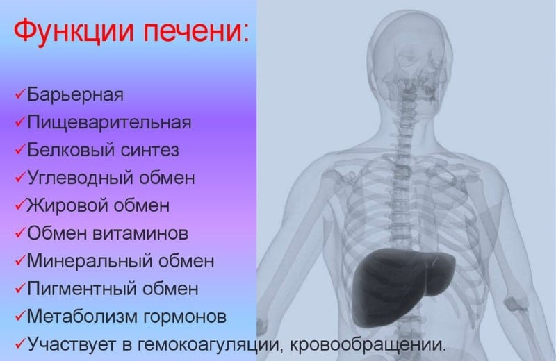 защита печени при приеме лекарств