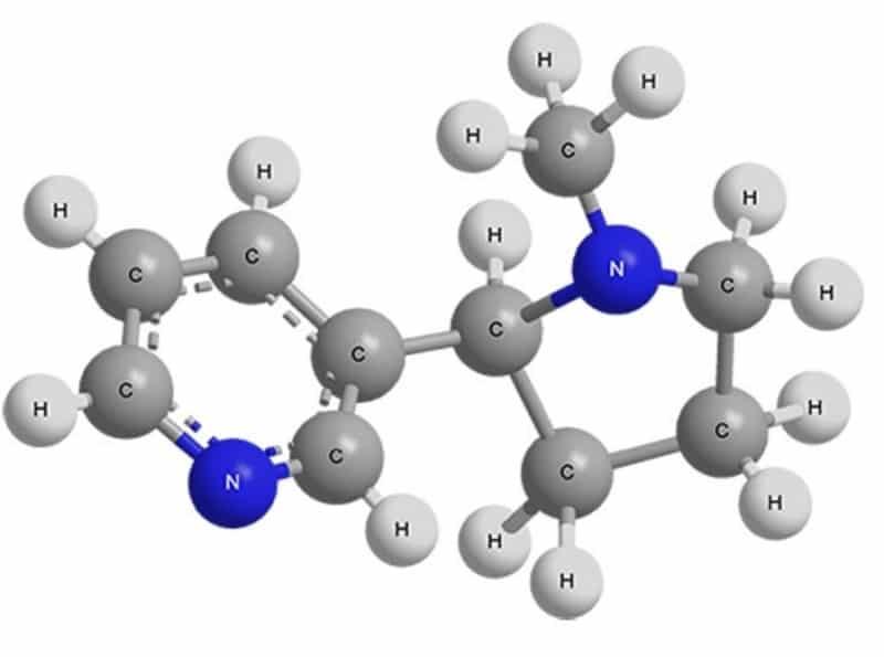 вырабатывает ли организм никотин