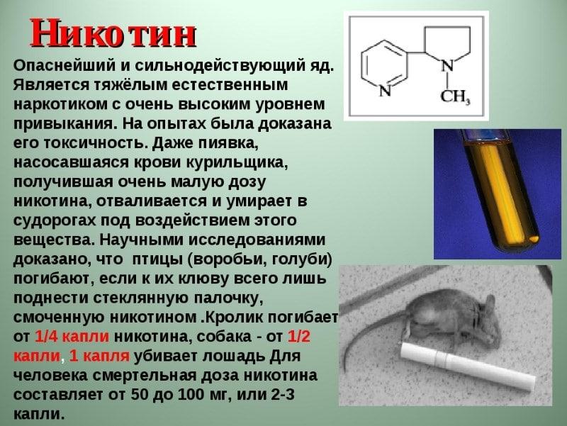 никотин вырабатывается в организме человека