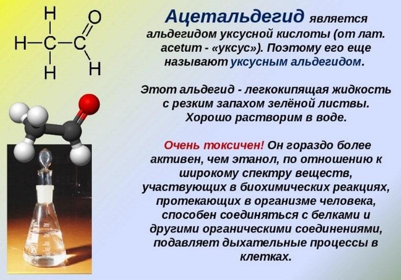 расщепление алкоголя в организме