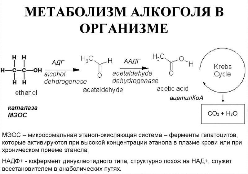 фермент перерабатывающий алкоголь
