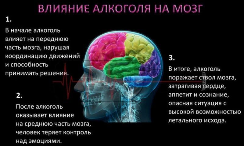 алкоголь действует на нервные клетки